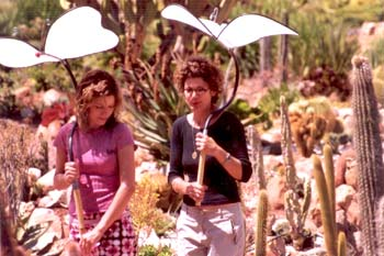 Butterfly umbrellas